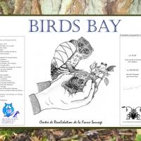 affiche-birdbay