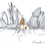Araignée-Archaea