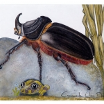 coléoptère-Oryctes-monoceros