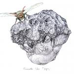 lepidoptera-Hepialidae-trictena-atripalpis-0652