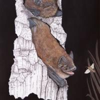 Pipistrelle-soprane_0267