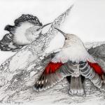 Tichodrome echelette, l'oiseau papillon-6312