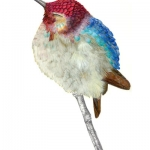colibri d'hélène